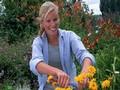 jardinerie experte en fleurs, arbustes, deux-sevres