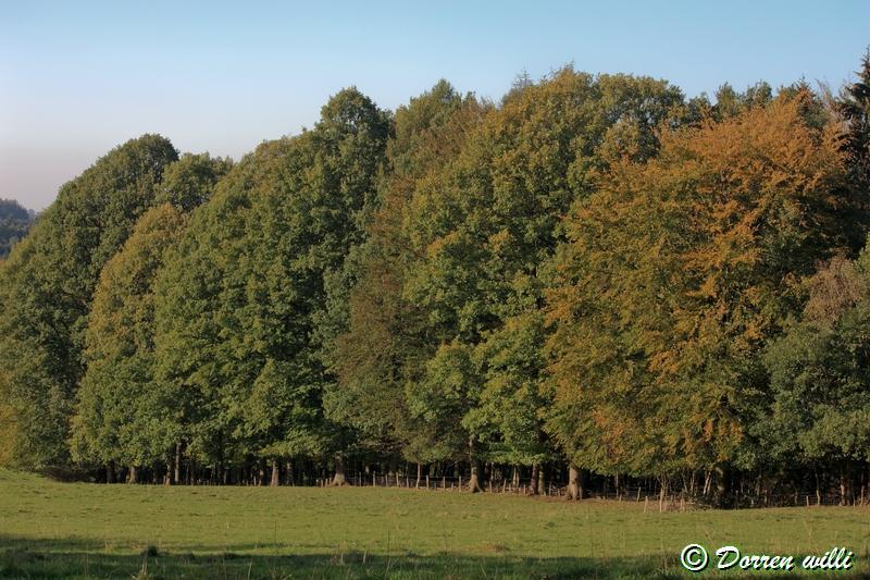promenade sur les fagnes et alentours ( jalhay ) le 16-oct-2011 Dpp_jalhay---16-o...1---0034-2dd70a0