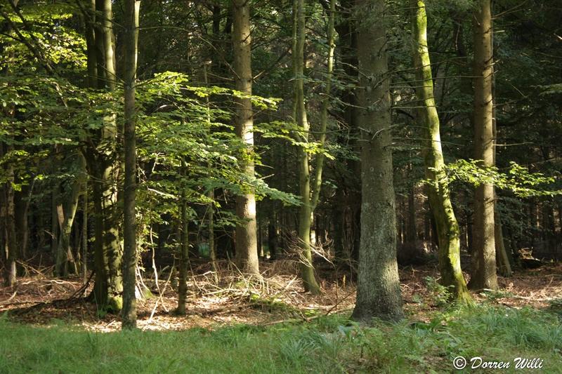 Ballade dans les Hautes fagnes et les sous-bois le 10-08-2011 Img_3090-800x600--2bbe8da