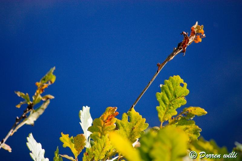 promenade sur les fagnes et alentours ( jalhay ) le 16-oct-2011 Dpp_jalhay---16-o...1---0022-2dd6eb4