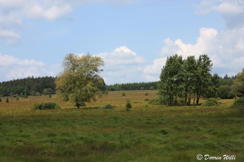 Ballade dans les Hautes fagnes et les sous-bois le 10-08-2011 Img_2629-800x600--2bbd5ed