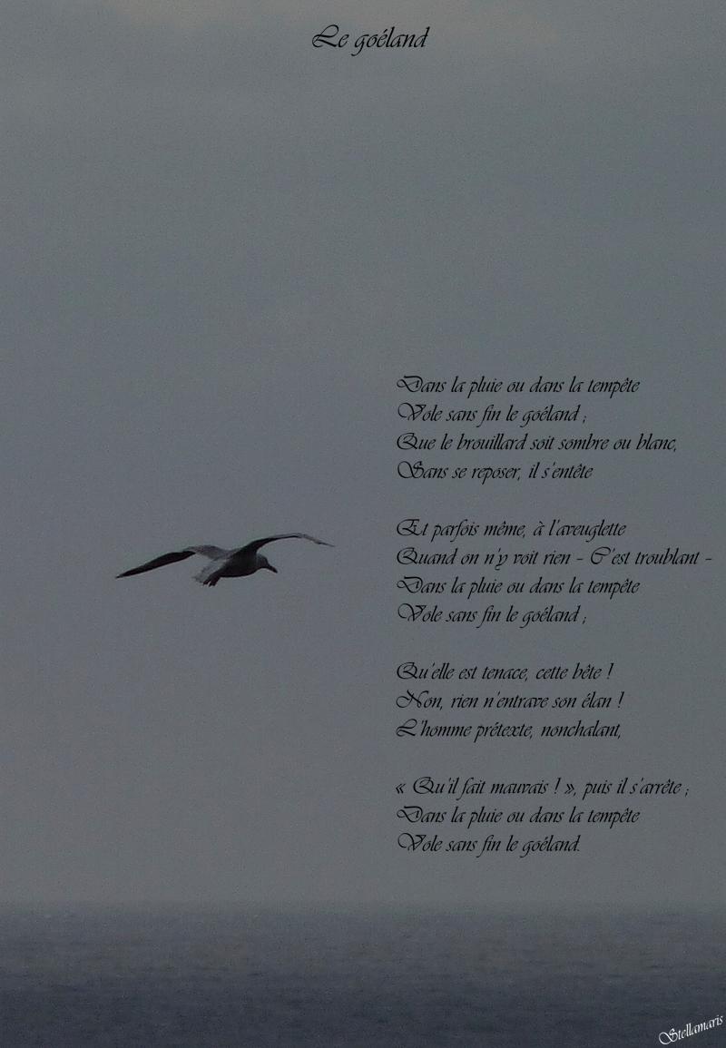 Le goéland / / Dans la pluie ou dans la tempête / Vole sans fin le goéland ; / Que le brouillard soit sombre ou blanc, / Sans se reposer, il s'entête / / Et parfois même, à l'aveuglette / Quand on n'y voit rien – C'est troublant – / Dans la pluie ou dans la tempête / Vole sans fin le goéland ; / / Qu'elle est tenace, cette bête ! / Non, rien n'entrave son élan ! / L'homme prétexte, nonchalant, / / « Qu'il fait mauvais ! », puis il s'arrête ; / Dans la pluie ou dans la tempête / Vole sans fin le goéland. / / Stellamaris
