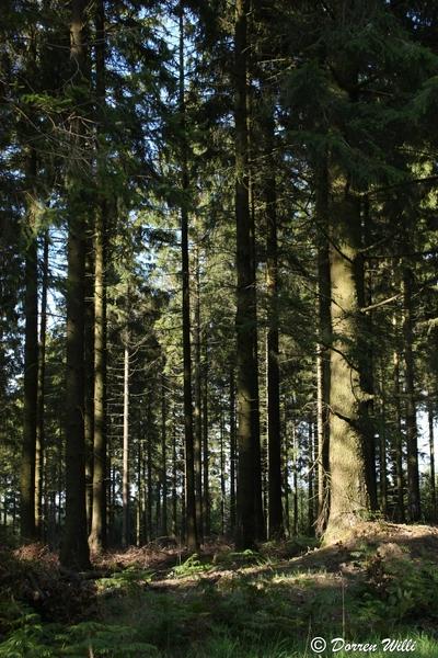 Ballade dans les Hautes fagnes et les sous-bois le 10-08-2011 Img_3033-800x600--2bbdb56