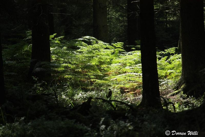 Ballade dans les Hautes fagnes et les sous-bois le 10-08-2011 Img_2672-800x600--2bbd711